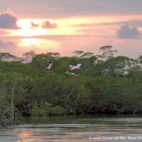 Sundown & Mangroves Boat Trip