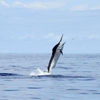 Sport und Tiefseefischen